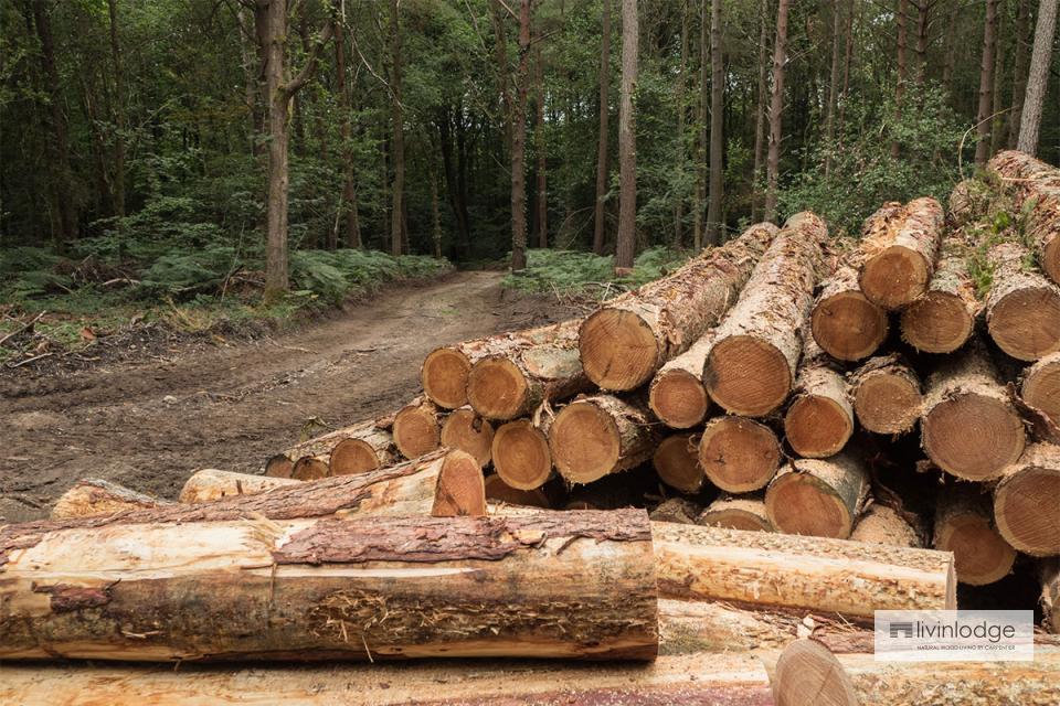 Illegaal gekapt hout is uit den boze